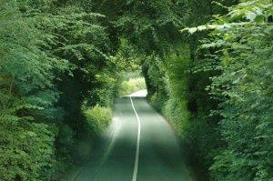 kerry olson wicklow road