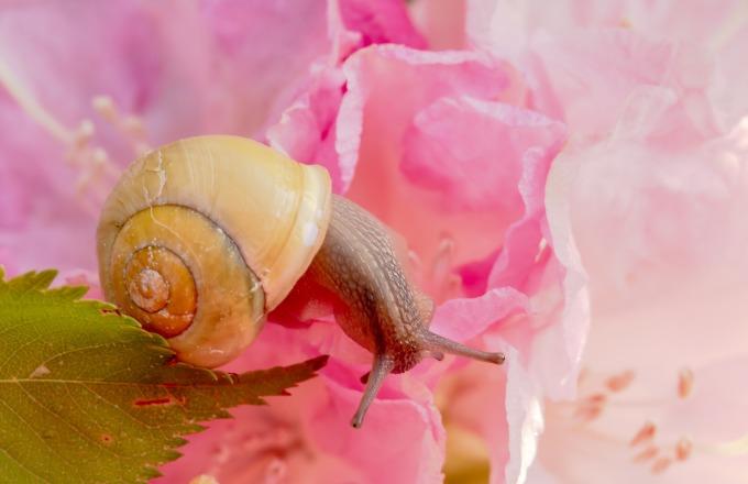 snail-3393204_1920